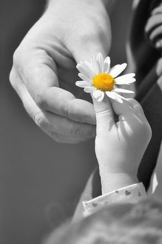 The hands of time.a daisy. (I will one day learn who took this photograph)The hands of time.a daisy. (I will one day learn who took this photograph) Color Splash, Color Pop, Black Splash, Black White, Beautiful Flowers, Beautiful Pictures, You're Beautiful, Beautiful Children, Daisy Love