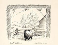 """""""Only in rare instances has anybody ever come to grief because of a spider."""" E.B. White on why he wrote Charlotte's Web"""