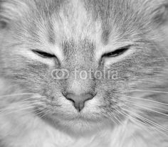 another of my pretty lady misty selling at fotolia.com