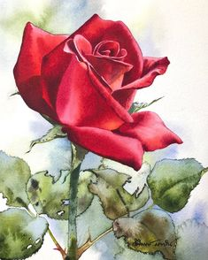 ❤️💕The rose painting. Watercolor Red, Watercolour Painting, Watercolor Flowers, Painting Art, Painting Flowers, Watercolors, Art Floral, Easy Flower Drawings, Drawing Flowers