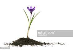 soil flower - Google 검색