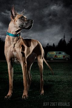 Scooby Doo's Mystery Team Takes on the Zombie Apocalypse — GeekTyrant