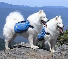Take a hike with your pup this spring and summer! #dogs #hiking #outdoors