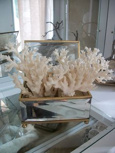 Coral in a vintage mirrored box         From Salvage Dior                 via Tammy Sims