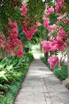 the curious bumblebee - splendorinthesouth: Southern life. Garden Paths, Garden Landscaping, Pretty In Pink, Beautiful Flowers, Pink Garden, My Secret Garden, Myrtle, Beautiful Gardens, Outdoor Gardens