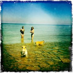 Dog Days of Summer Dog Days, My Life, Dogs, Summer, Image, Summer Time, Pet Dogs, Doggies, Verano