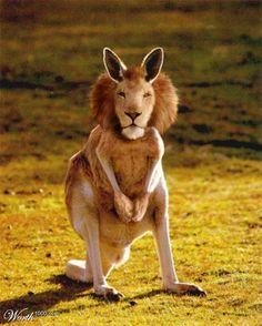 a lion kangaroo