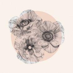 diana severinenko tattoo   black and gray poppies