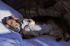 because of hound dog cuddles.