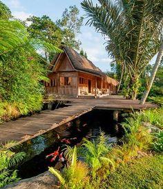 54 Best Jungle Retreat Images Jungle Resort Places Cool