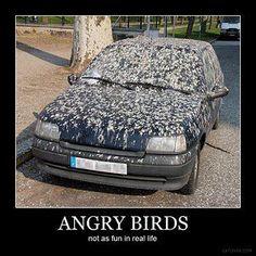 Angry Birds IRL.....Schijtvogels