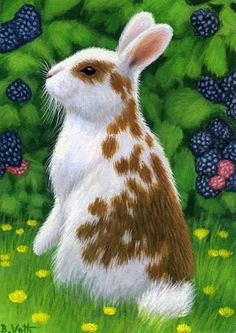 Rabbit bunny blackberries limited edition aceo print art #Realism