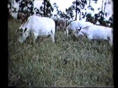 ▶ Keyline Farming 1955 - YouTube
