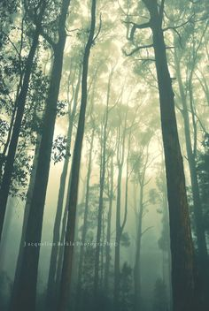 The Dandenongs - Melbourne Australia- beautifully peaceful. Federation Of Australia, Great Places, Places To Go, Terra Australis, Magical Tree, Bay Of Islands, Nature Reserve, Melbourne Australia, Natural Wonders