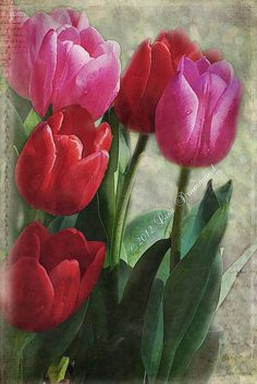Painted tulips – Karen Krueger – Join the world of pin Tulip Painting, Oil Painting Flowers, Watercolor Flowers, Watercolor Art, Flower Paintings, Flower Canvas, Flower Art, Art Floral, Buddha Wall Art