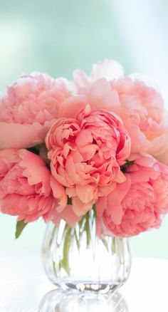 a bouquet of pink peonies. My wedding flowers! So beautiful My Flower, Fresh Flowers, Beautiful Flowers, Pink Flowers, Peony Flower, Flower Ideas, Cut Flowers, Prettiest Flowers, Peony Colors