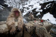 032012 - 地獄谷野猿園宛 Snow Monkey