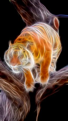 Tiger in Tree by Bob Smerecki