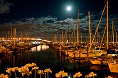 moon @ westhaven marina in auckland new zealand