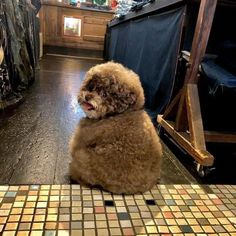 Cute Puppies, Cute Dogs, Dogs And Puppies, Doggies, Cute Fluffy Dogs, Cute Little Animals, Cute Funny Animals, Fluffy Animals, Animals And Pets