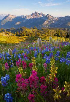 Mt. Rainier National Park.