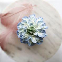 #scabiosa cupcake 🌱 . Buttercream flowercake . #플라워케이크  #플라워케익 #대구플라워케이크  #버터크림플라워케이크  #꽃 #꽃케이크 #꽃스타그램  #케이크  #메종올리비아  #베이킹 #베이킹그램  #flowercake  #flower  #buttercreamdecorating  #buttercreamflowercake #buttercream  #buttercreamcake #koreaflower #koreanflowercake #koreabuttercreamflower #koreabuttercreamcake #koreaflowercake  #bakingram #cake #maisonolivia