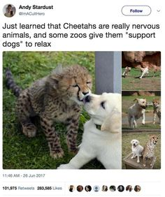 Things that make you go AWW! Like puppies, bunnies, babies, and so on. A place for really cute pictures and videos! Funny Animal Memes, Cute Funny Animals, Cute Baby Animals, Funny Cute, Animals And Pets, Funny Memes, Funny Humour, Funny Dog Sayings, Cute Animal Humor