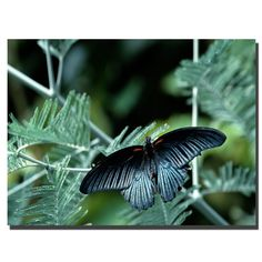 Tropical Butterfly by Kurt Shaffer Photographic Print on Canvas