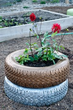 Spray painted tire planter. something my grandma would do...probably should tell her about this!