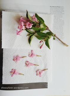 Blumen trocknen: in 3 Minuten oder 3 Wochen, ich zeig dir wie! #Blumen #Blüten