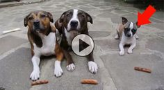 Keep your eye on the little dog. This video is only 18 seconds but might leave you laughing for 18 minutes! :)