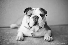 Missy the Bulldog by Julie Saraceno on 500px
