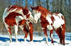 Horses in the winter beautiful