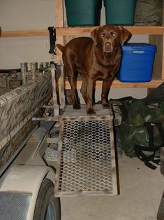 Click this image to show the full-size version. Duck Hunting Blinds, Duck Hunting Gear, Waterfowl Hunting, Hunting Cabin, Hunting Dogs, Dog Boat Ramp, Duck Boat Blind, Yellow Lab Puppies, Boat Blinds