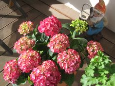 Hortensie and a garden gnome Gnome, Floral Wreath, Wreaths, Home Decor, Spring, Flowers, Limelight Hydrangea, Flower Crowns, Door Wreaths
