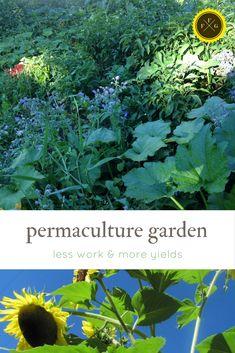 Grow a permaculture garden