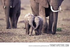 Baby elephants holding each other's trunks