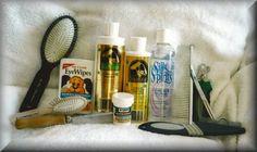 KandL Kidz - Specializing in Healthy Happy Havanese - Havanese Grooming