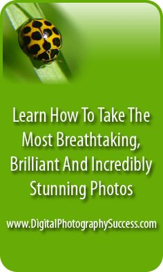 5 Tips To Help You Master Digital Photography