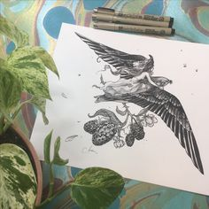 Inktober Day 1 - by Audra Auclair  ink drawing, swift, bird, lineart, blackwork.