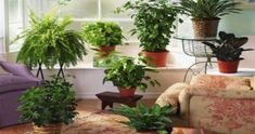 Fake plants for home decor fern room windows facing north and interiors lacking artificial ideas Fake Plants, Indoor Plants, Leafy Plants, Rain Collection Barrel, Homemade Greenhouse, Flower Boxes, Flowers, Flower Ideas, Wooden Greenhouses