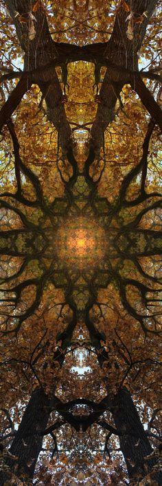 Tree-Cathedral-ceilings-05 (janfufu-2013)