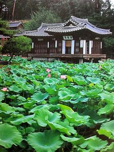 Lotus Pond Garden - South Korea