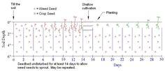 False Seed Bed weeding