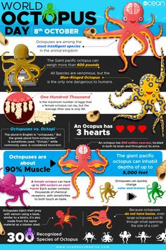 Every Oct we celebrate World Octopus Day. That's why we have put together this awesome Octopus Infographic and list of 10 different types of octopus dedicated to our eight-legged, three-hearted, inky buddies! Types Of Octopus, The Octopus, Beautiful Creatures, Animals Beautiful, Octopus Facts, Marine Biology, Animal Facts, Ocean Creatures, Kraken