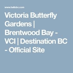 Victoria Butterfly Gardens | Brentwood Bay - VCI | Destination BC - Official Site