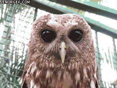 Animated Animal Haiku - Owl And The Hoot, Edition