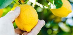 Comuns em fazendas e sítios,espécies de árvores frutíferas se popularizaram no ambiente urbano e são vistas em varandas e quintais nas grandes cidades. Algumas das mais conhecidas são a jabuticabeira, o l