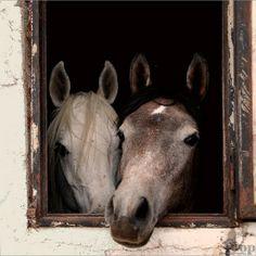 Beautiful horses. everything-equine
