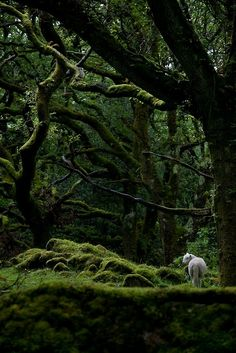 what are you UP to, you mischievous little forest-dwelling sheep.